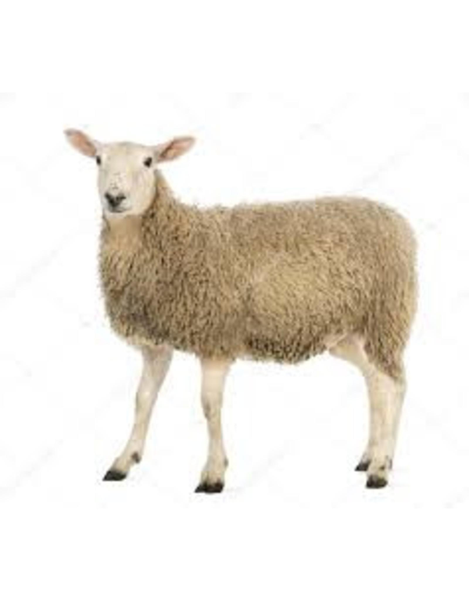 Gemalen schapenpens