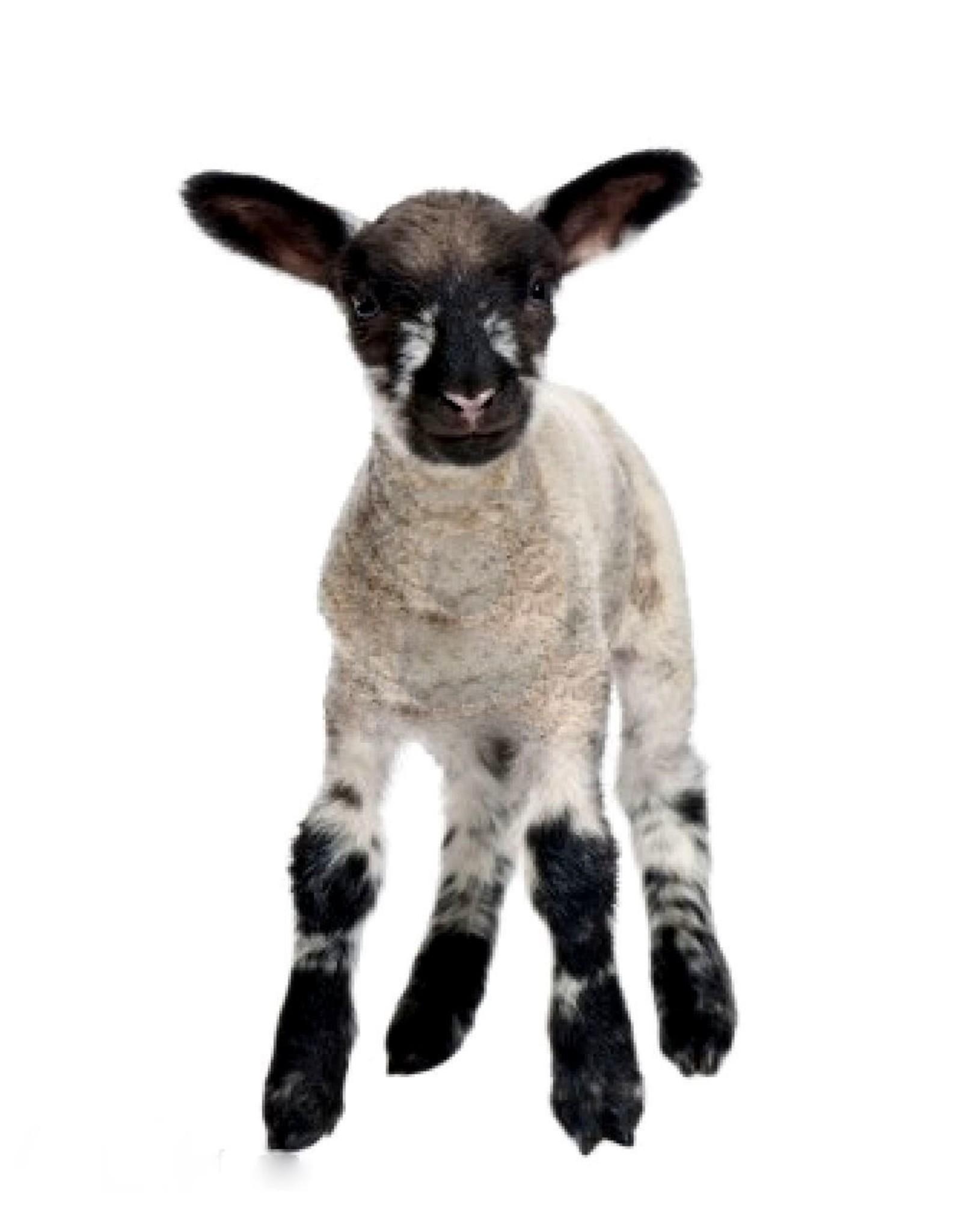 Vers vlees (KVV) voor de hond | Degomeat | Lam mix compleet | 1000 gram