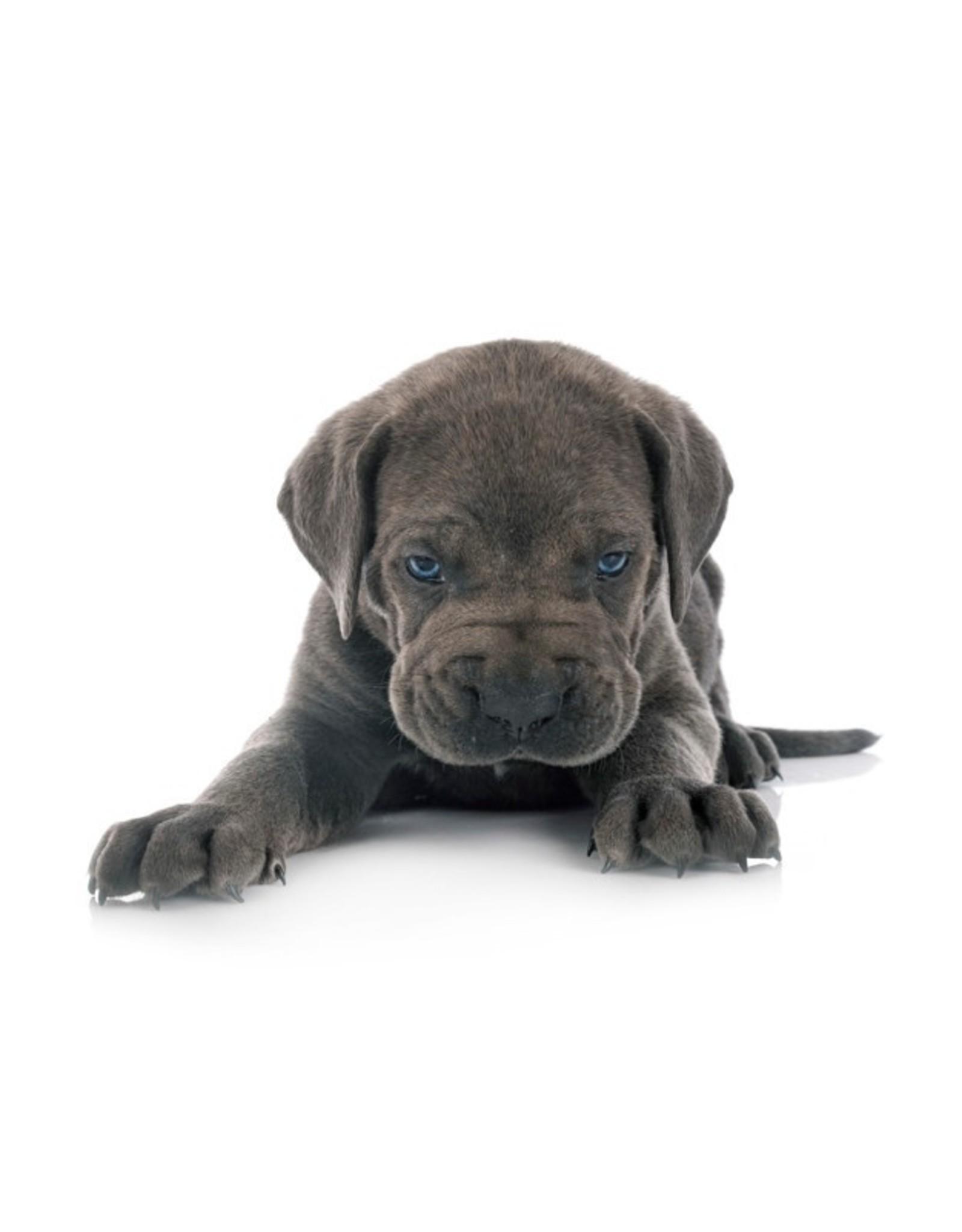Vers vlees (KVV) voor de hond | Puppy & Kitten mix compleet | 500gr.