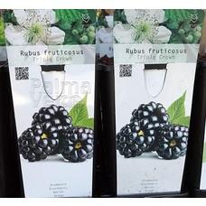 Eetbare tuin-edible garden Rubus fruticosus Triple Crown - Braambes
