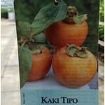 Eetbare tuin-edible garden Diospyros kaki - Sharonfruit - Persimmon