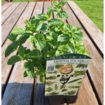 Eetbare tuin-edible garden Mentha spicata