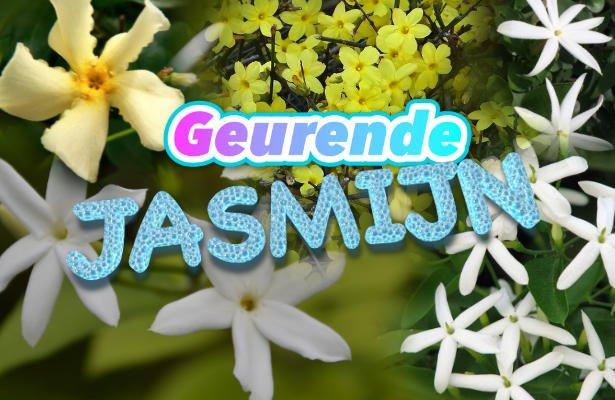 Heerlijk geurende jasmijnen