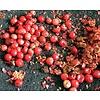 Eetbare tuin-edible garden Schinus terebinthifolius - Roze peper