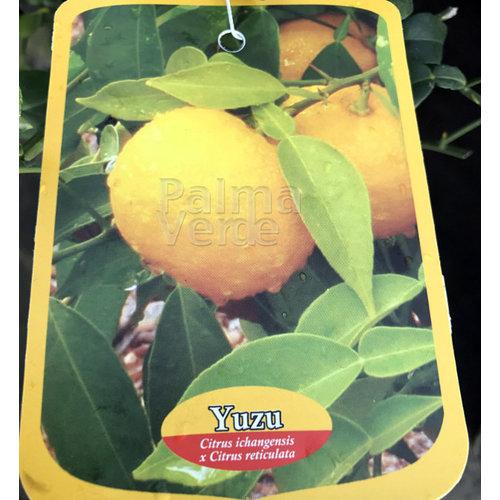 Eetbare tuin-edible garden Citrus Yuzu