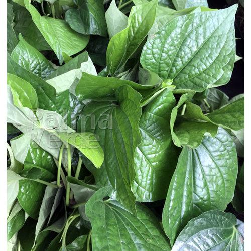 Eetbare tuin-edible garden Piper sarmentosum - Vietnamese bladpeper