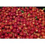 Eetbare tuin-edible garden Ugni molinae - Chilean guava