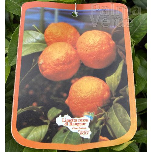 Eetbare tuin-edible garden Citrus limetta rossa di Rangpur - Orange lime