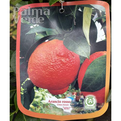 Eetbare tuin-edible garden Citrus Arancio Rosso - Blood Orange
