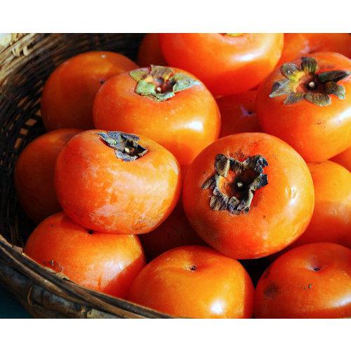 Eetbare tuin-edible garden Diospyros virginiana - Amerikaanse persimoen