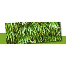 Non-invasive bamboo