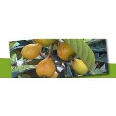 Matig winterhard eetbaar en fruit
