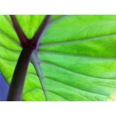 Blad-leaf