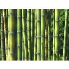 Bamboe-bamboo