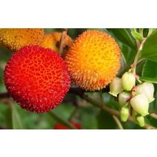 Eetbare tuin-edible garden Arbutus unedo