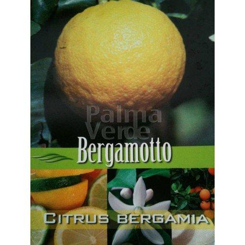 Eetbare tuin-edible garden Citrus bergamot - Citrus bergamia