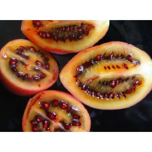 Eetbare tuin-edible garden Cyphomandra betacea - Solanum betaceum - Tamarillo - Tree tomato