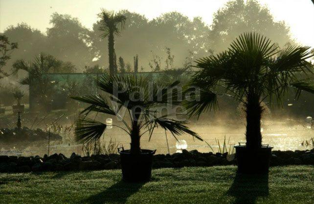 Onderhoud en verzorging palmbomen