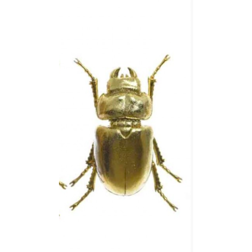 POT & VAAS Wall Deco Insect Gold