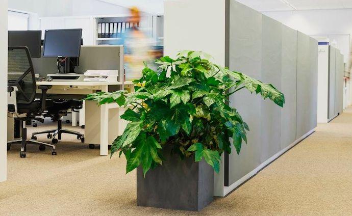 Planten zorgen voor minder stress op kantoor