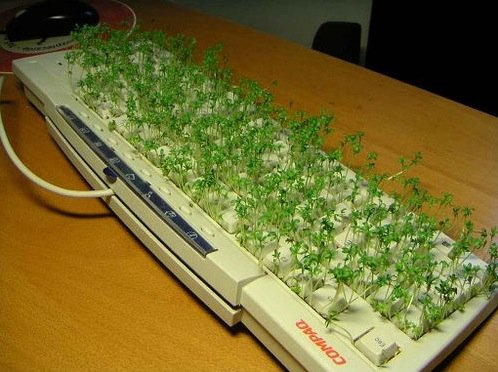 Toetsenbord in bloei