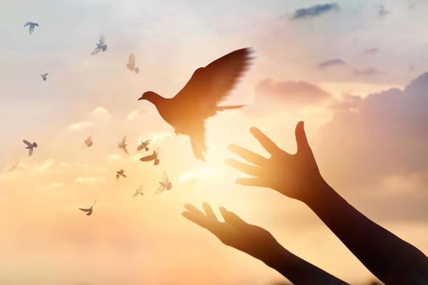 Travipharma - Pigeons Medicines
