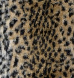 Bont korthaar baby leopard