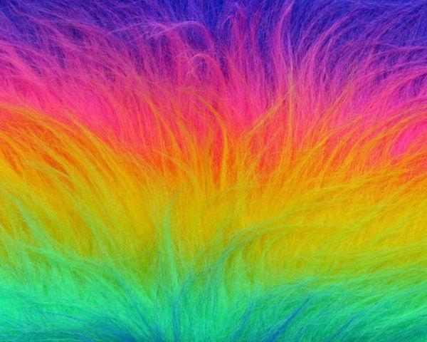Bont langhaar rainbow