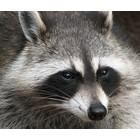Bruine ogen voor zoogdieren