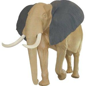 Afrikaanse savanne olifant (Loxodonta africana)