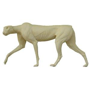 Cheeta / Jachtluipaard (Acinonyx jubatus)