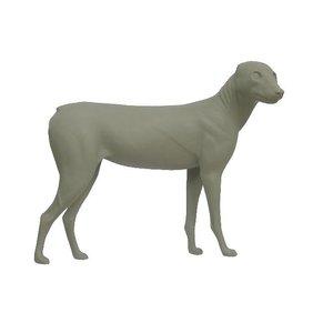 Goudjakhals (Canis aureus)