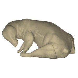 Badger (Melis melis)