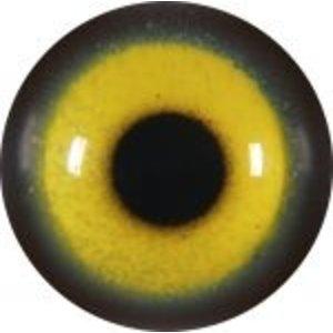 Roodsnavelkitta (Urocissa erythrorhyncha)