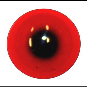Gekuifde vuurrugfazant (Lophura ignita)