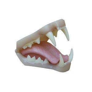 Lynx - gebit 2