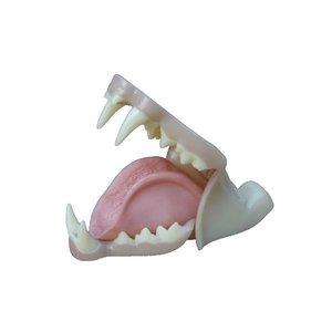Lynx - gebit 3 met keelholte