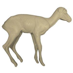 Steenbok - Life size 1