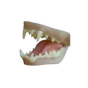 Visotter - gebit in grondkleur