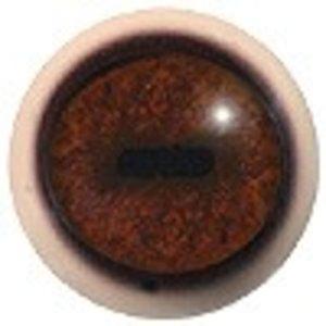 Gems (Rupicapra rupicapra)