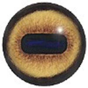 Moeflon (Ovis ammon)