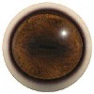 Muskusos (Ovibos moschatus)