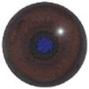 Stekelvarken (Hystricidae / Erethizontidae)