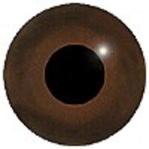 Audouin's meeuw (Ichthyaetus audouinii)