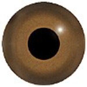 Kleine mantelmeeuw (Larus fuscus)