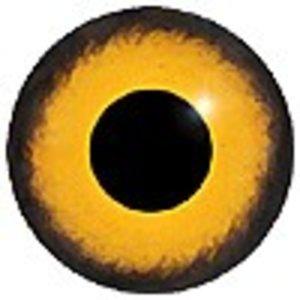 Sperwer man juveniel (Accipiter nisus)