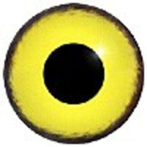 Wespendief (vrouw adult - Pernis apivorus)