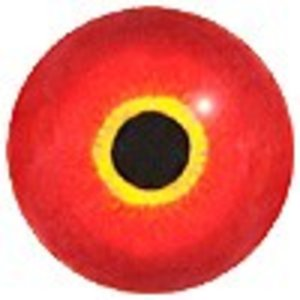 Tafeleend man (Aythya ferina)