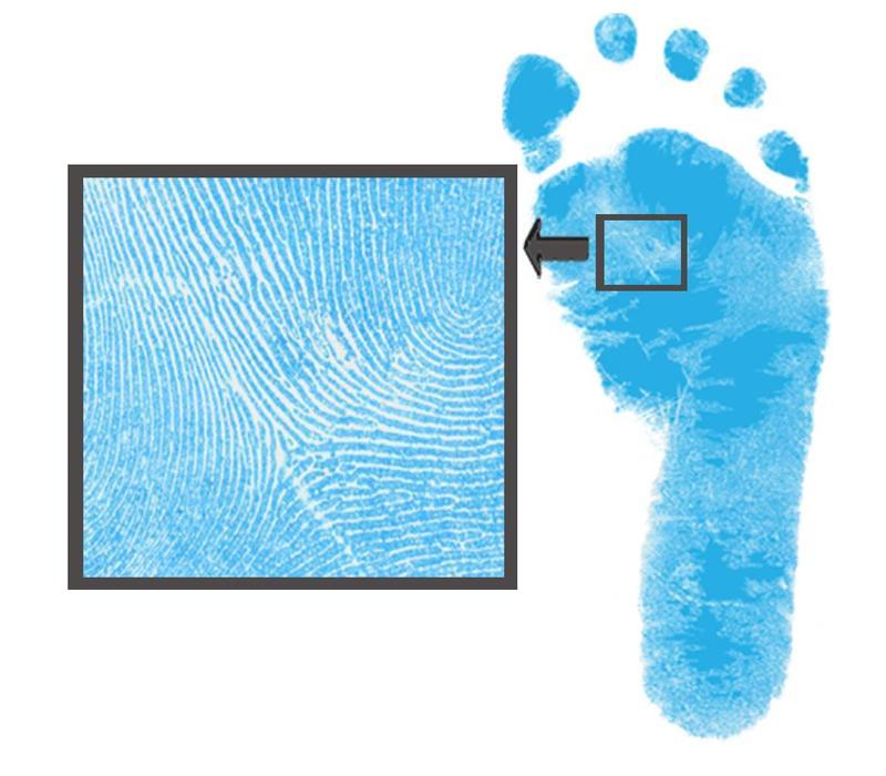Farvet Dactek fod og håndtryk sæt