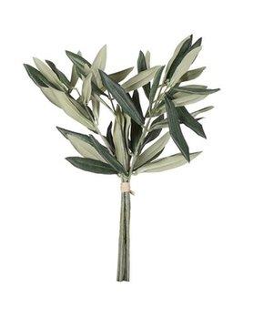 Lene Bjerre Zweige Olivenbaum